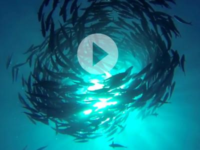 Scuba Diving on Bali