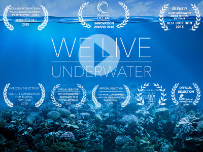We live underwater - The Jetlagged's film about building Biorock artficial reefs against coral bleaching