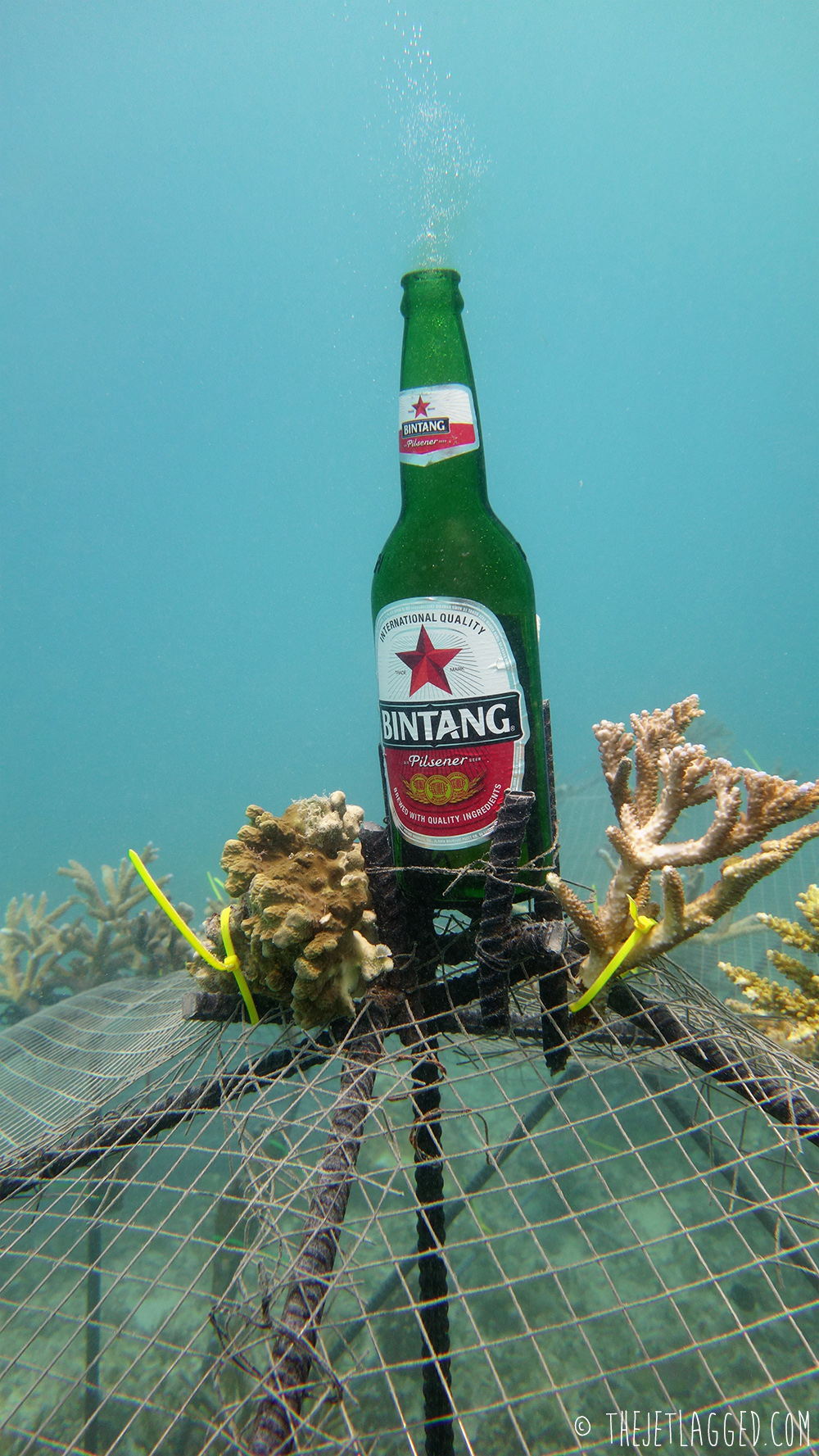 The Bintang Biorock and how it got its name