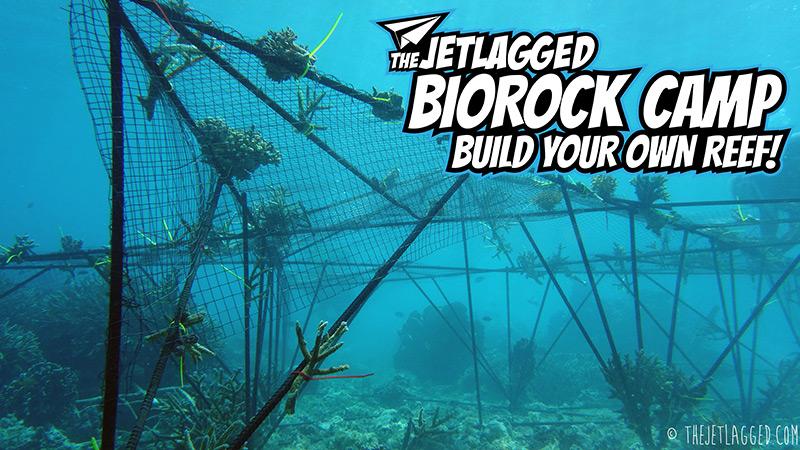 The Jetlagged Biorock Camp