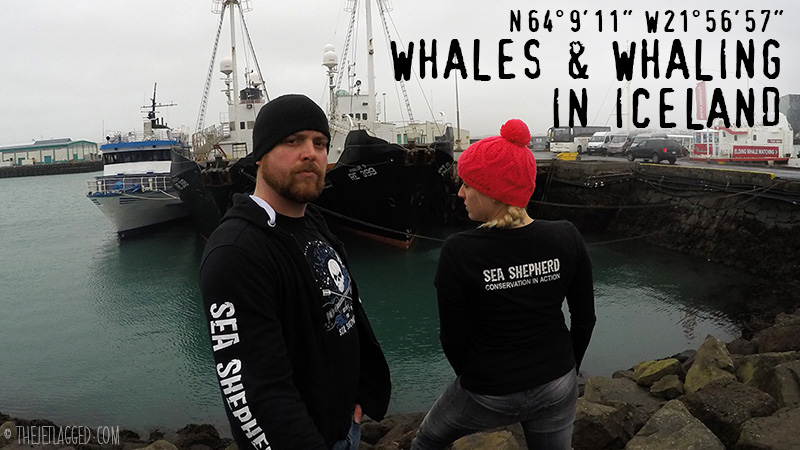 Whales & Whaling in Iceland
