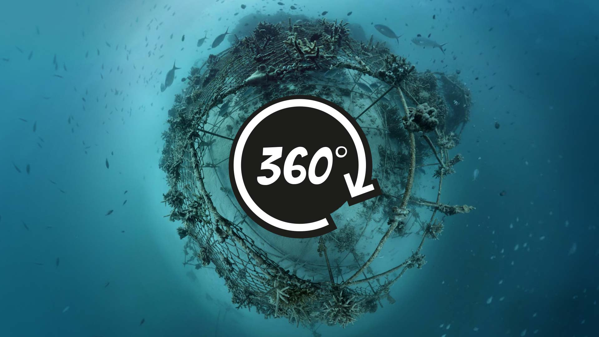 360 underwater video of a Biorock reef