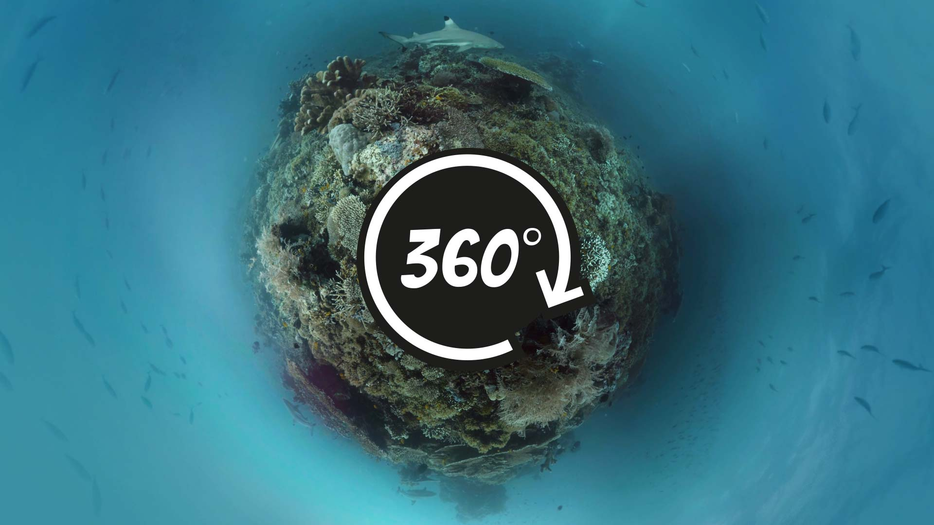 360 underwater video of a coral reef with sharks