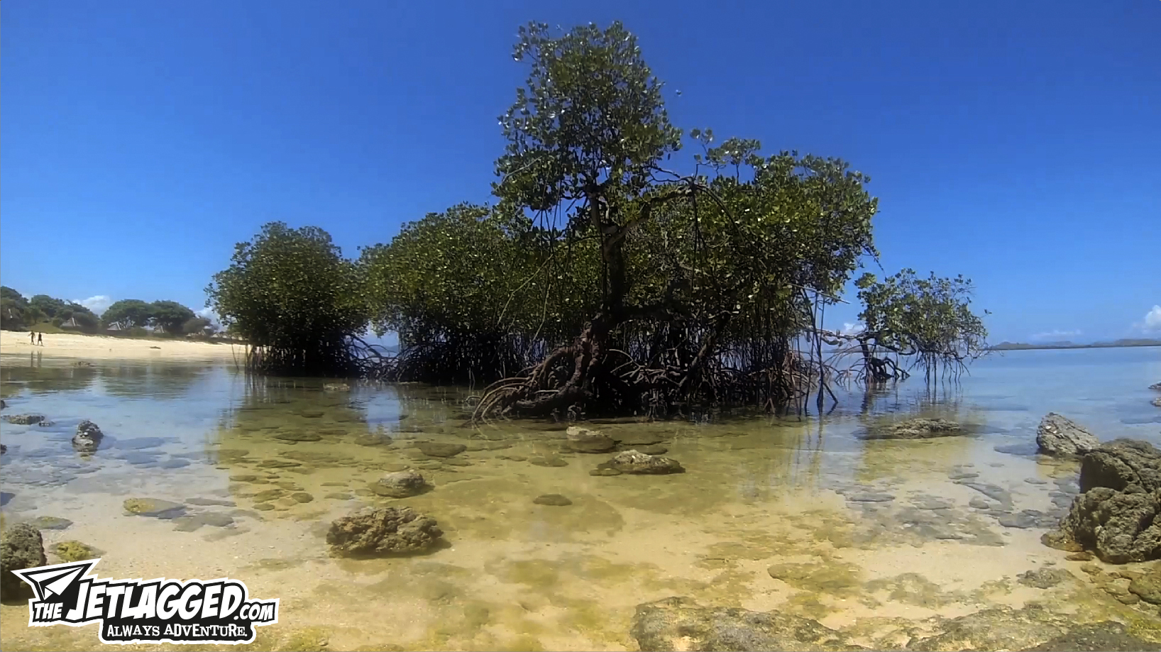 Making_Of_Kanawa_Island_Mangroves
