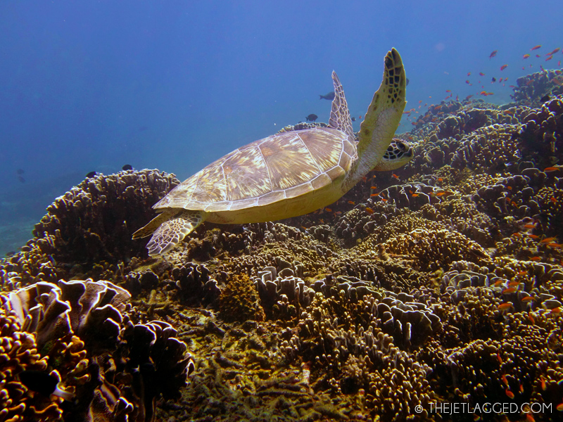 Turtle seen during scuba diving on Gili Trawangan