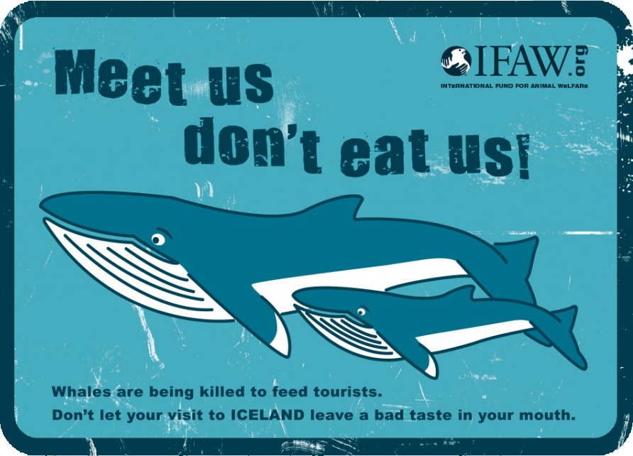 Whale friendly restaurants