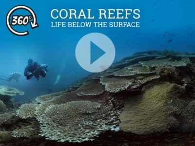 The Jetlagged 360 underwater film: Coral Reefs - Life Below The Surface